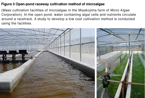 Figure 3  Culture facility with raceway method (Mass culture facility of algae in the Miyakojima farm, Micro Algae Corporation) In the pond, which forms similar to an oval circuit, the culture fluid of microalgae is slowly circulating like a flowing pool. The study to find out the ways to culture microalgae inexpensively and efficiently is conducted here.