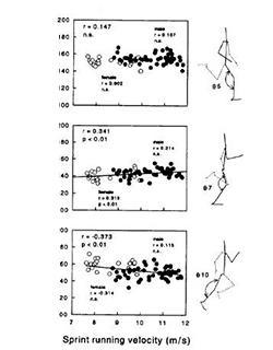 図 接地中の膝関節角度