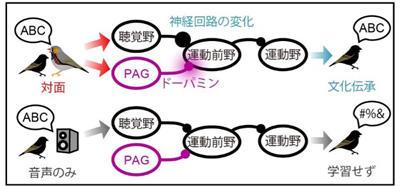 waseda_0628_figure2.jpg